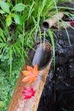 Esdoornbladeren op het bamboe royalty-vrije stock fotografie