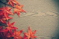 Esdoornbladeren op houten textuur Stock Foto's