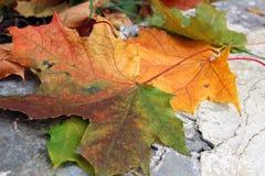 Esdoornbladeren op steen Royalty-vrije Stock Afbeeldingen