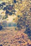 Esdoornbomen en van esdoornbladeren landschap met Instagram-stijl filt Stock Foto