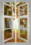 Esdoornboom die door venster wordt bekeken royalty-vrije stock afbeeldingen