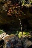 Esdoornboom onder waterval Stock Fotografie