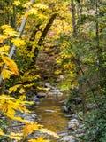 Esdoornbos in de herfst met stroom Royalty-vrije Stock Afbeelding