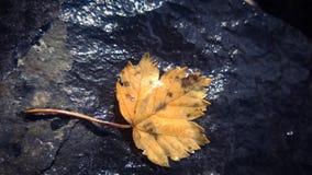 Esdoornverlof botom van een waterval Royalty-vrije Stock Foto's