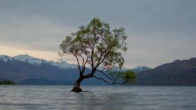 Ese árbol de Wanaka, wanaka, Nueva Zelanda 4k metrajes