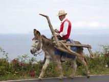 Esel als zu pflügen Transportmittel und Zugtiere Stockfotografie