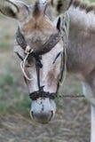 Esel auf einem Gebiet am sonnigen Tag Lizenzfreie Stockfotografie