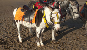 Esel auf einem Strand Lizenzfreies Stockfoto