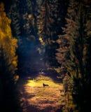 Esel auf Lichtung stockfotografie