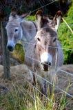 Esel, Bauernhof, Nelson stockfoto