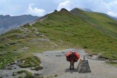 Esel in den Alpen Lizenzfreie Stockfotografie