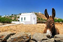 Esel in der griechischen Landschaft Stockfotografie