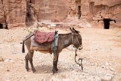Esel, der in Petra Aqba Jordan stillsteht lizenzfreie stockfotografie