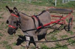 Esel, der Wagen zieht Lizenzfreie Stockfotos