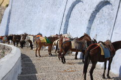 Esel, die auf Touristen in Santorini warten Stockfotos