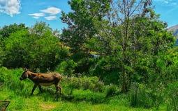 Esel im Dorf lizenzfreie stockfotos