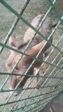 Esel im Käfig stockbild