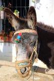 Esel mit einem bunten Kopfstück Lizenzfreie Stockbilder