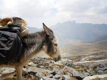 Esel mit einer Eingabe lizenzfreie stockfotografie