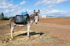 Esel mit Plastiksattel Lizenzfreie Stockbilder