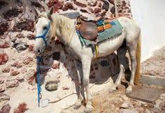 Esel in Oia, Santorini-Insel, Griechenland Stockbilder