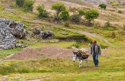 Esel in Peru Lizenzfreies Stockfoto