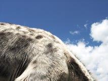 Esel-Rückseite stockfoto