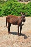 Esel steht auf einem Hintergrund von grünen Büschen Stockfotografie