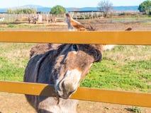 Esel in Toskana, Italien lizenzfreies stockbild