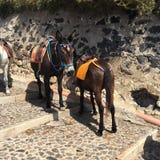 Esel-Treppen-Reise Santorini Stockbilder