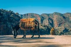Esel und Affe Stockfoto