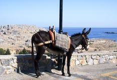 Esel und Meer Stockfoto