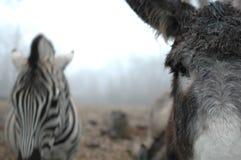 Esel und Zebra Lizenzfreie Stockfotografie