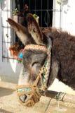 Esel verziert mit einem farbigen Kopfstück Stockfotografie