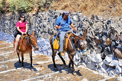 Esel von Santorini Lizenzfreie Stockfotografie