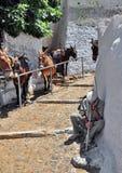 Esel von Santorini Lizenzfreies Stockfoto