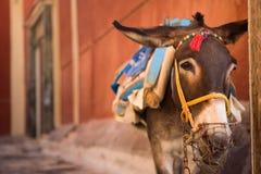 Esel von Santorini stockfotografie