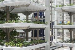 Esempio della coltura idroponica Fotografie Stock Libere da Diritti