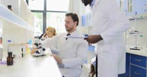Esempio di Man Examining Plant dello scienziato con il microscopio che funziona nel laboratorio della genetica con il gruppo di g stock footage