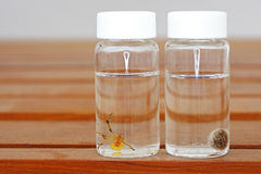 Esemplare del ragno marrone della vedova Fotografia Stock Libera da Diritti
