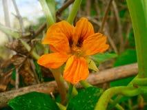 Esencja - słonecznego dnia kwiat Zdjęcia Royalty Free