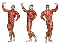 esercitarsi Proiezione del corpo umano apollo Immagini Stock