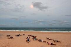 Esercizio della gente nella Gold Coast Queensland Australia Immagini Stock Libere da Diritti