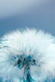 Esfera abstrata da semente Fotos de Stock Royalty Free