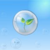 Esfera de cristal con el brote, ecología Fotografía de archivo libre de regalías