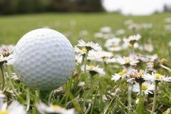 Esfera de golfe nas flores imagem de stock royalty free