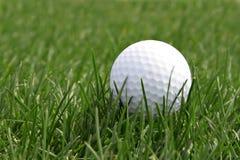 Esfera de golfe no campo Fotos de Stock
