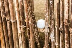 Esfera de golfe perdida Fotografia de Stock Royalty Free