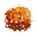 Esfera de Lily Flowers Fotos de archivo libres de regalías