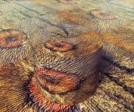 Esfera de madera 3D del tecture Fotos de archivo